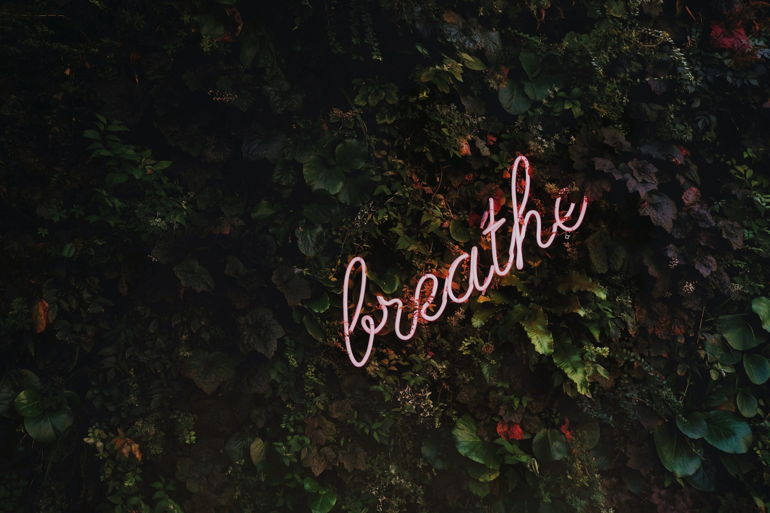 neon sign saying breathe sitting in grass